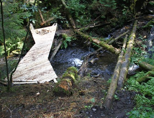 Waterfall, rocks and fallen trees – bridge in the forest